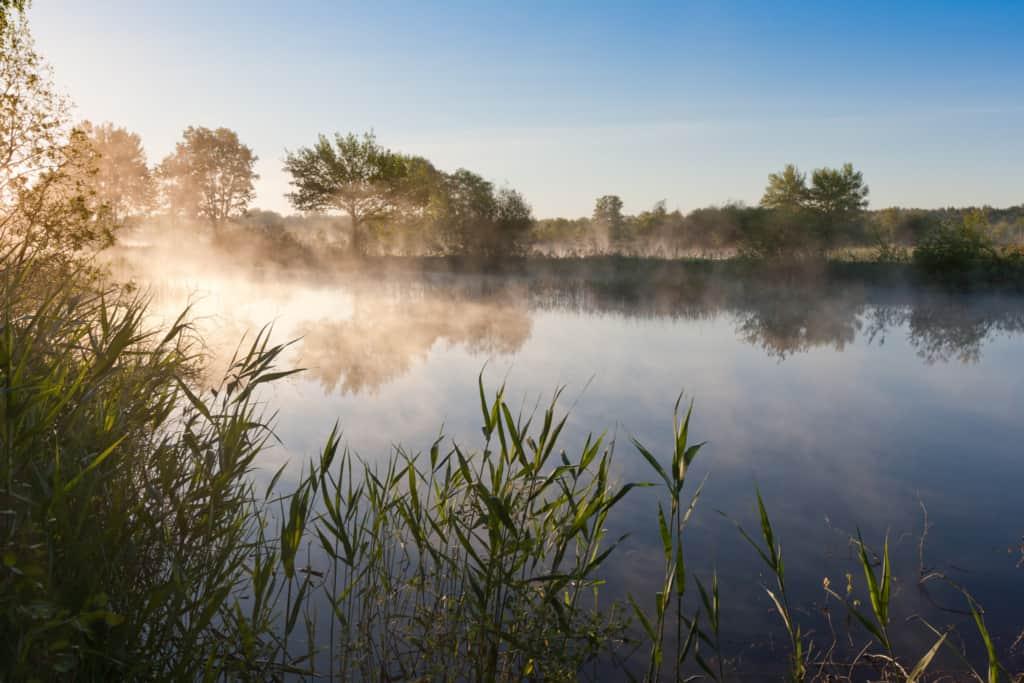 Der Nebel steigt auf über den Karpfenteichen der Teichwirtschaft Holm   Foto: Sven Kleinert