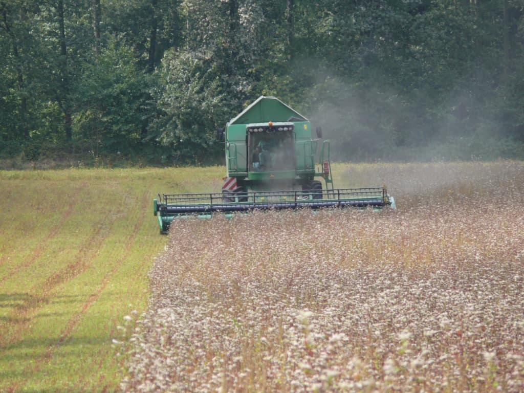 Bucklwheat harvest at Hof Tütsberg   VNP Stiftung