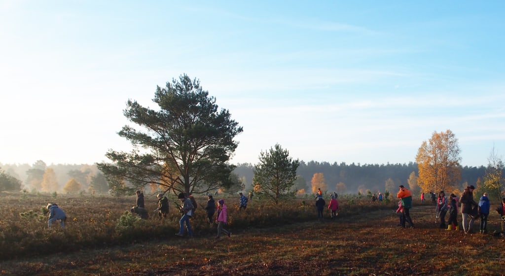 """""""Entkusseln"""" - Children help to clear young trees and scrubs   VNP Stiftung"""