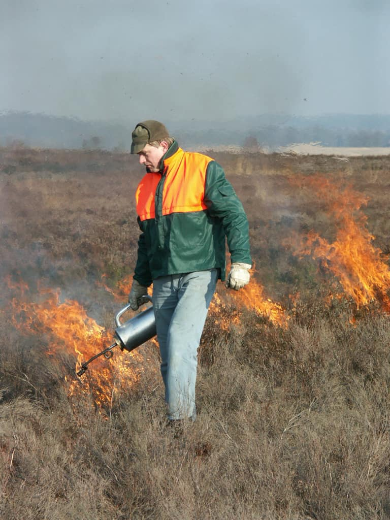 Heath burning: Spot lighting of the heath area with the DripTorch   VNP Stiftung