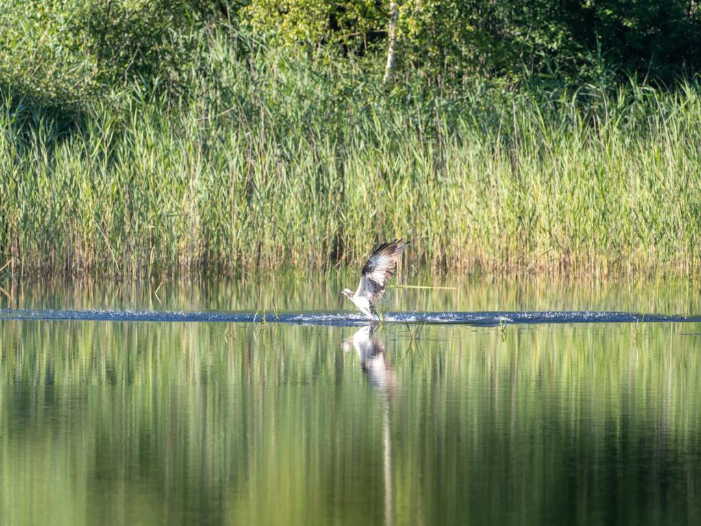 The Holm pond farm: A special ecosystem   Photo: Sven Kleinert