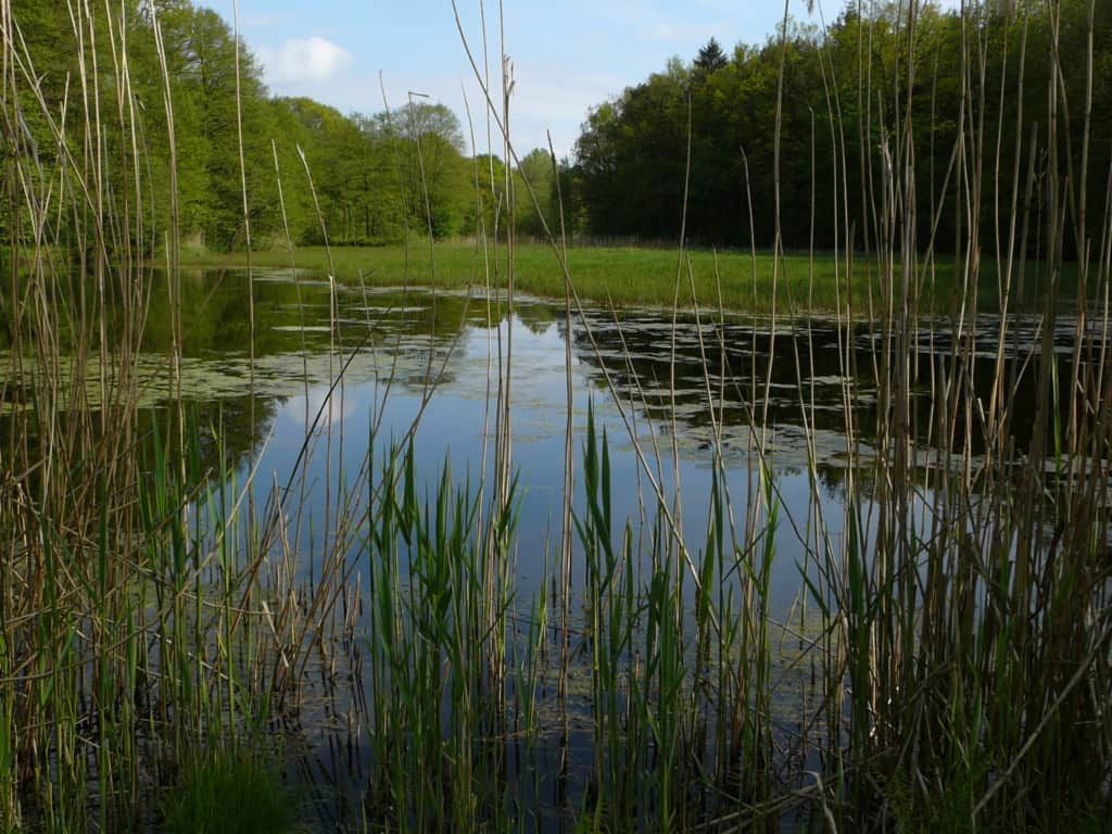 Holm pond farm with carp farming   VNP Stiftung
