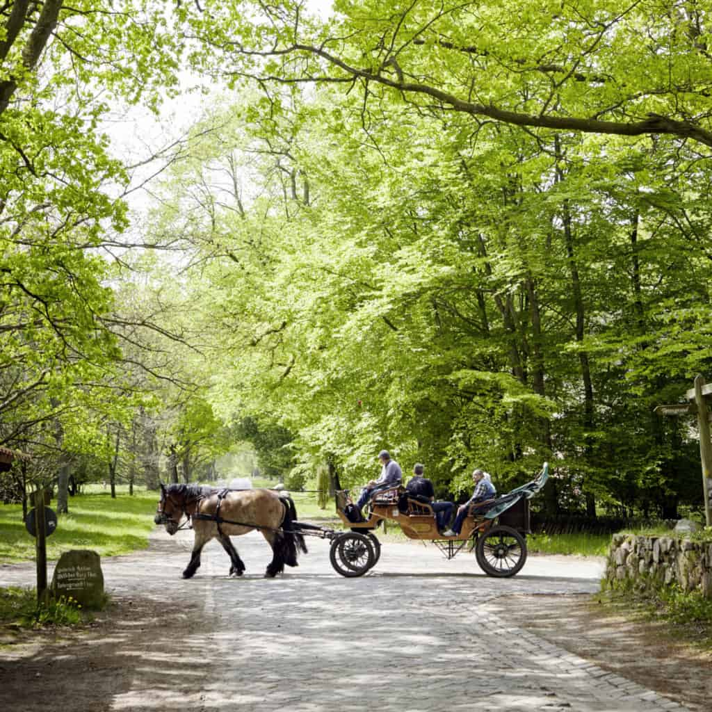 Horse-drawn carriage with guests in Wilsede | photo: Burmester