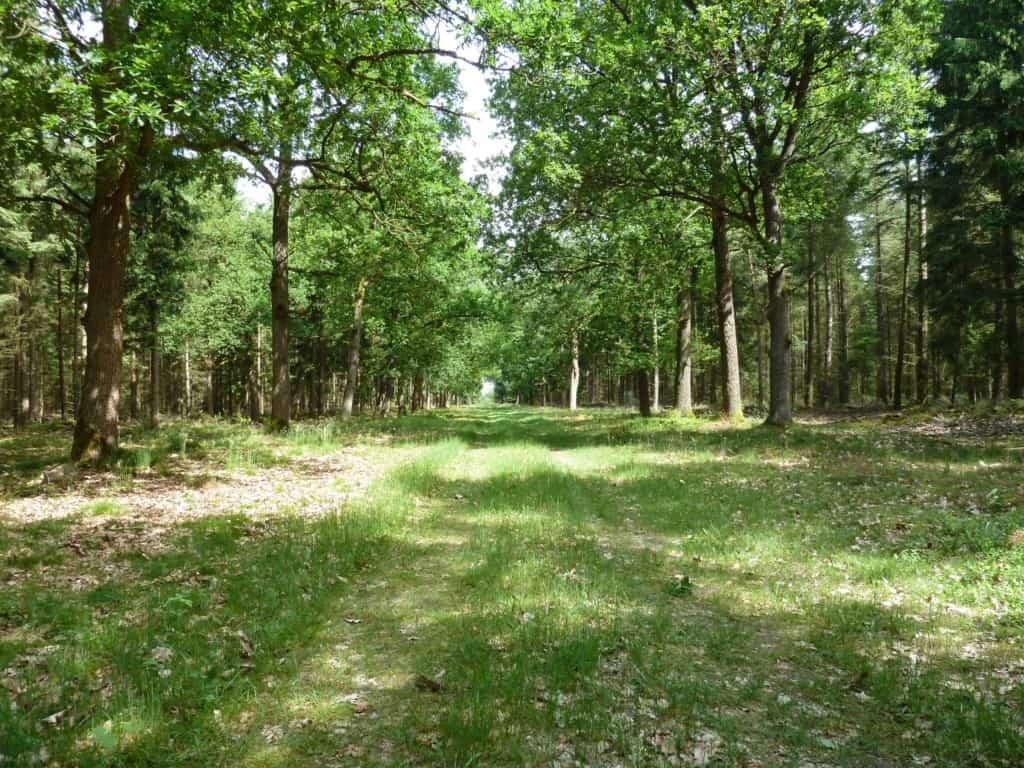 Mixed forest | VNP Stiftung