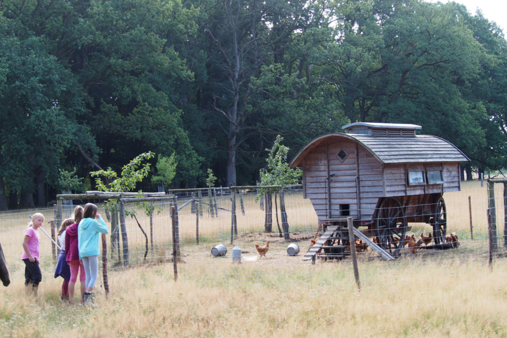 The chicken cart at the Hillmershof school farm   VNP Children's Academy
