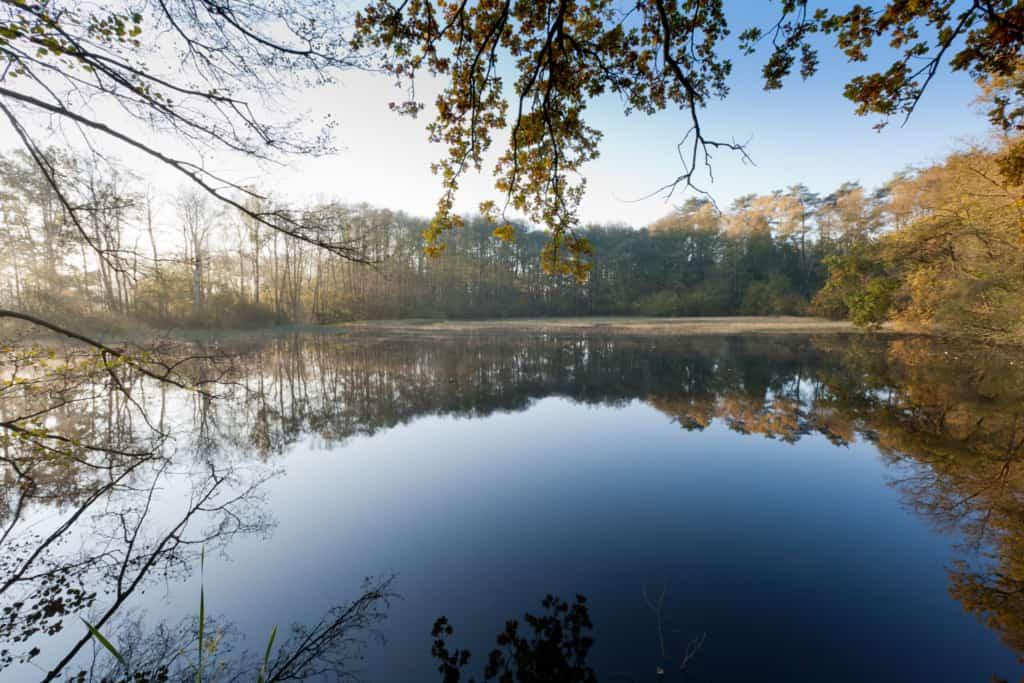 Holm pond farm: largest pond and wetland habitat in the Lüneburger Heide nature reserve   Photo: Sven Kleinert