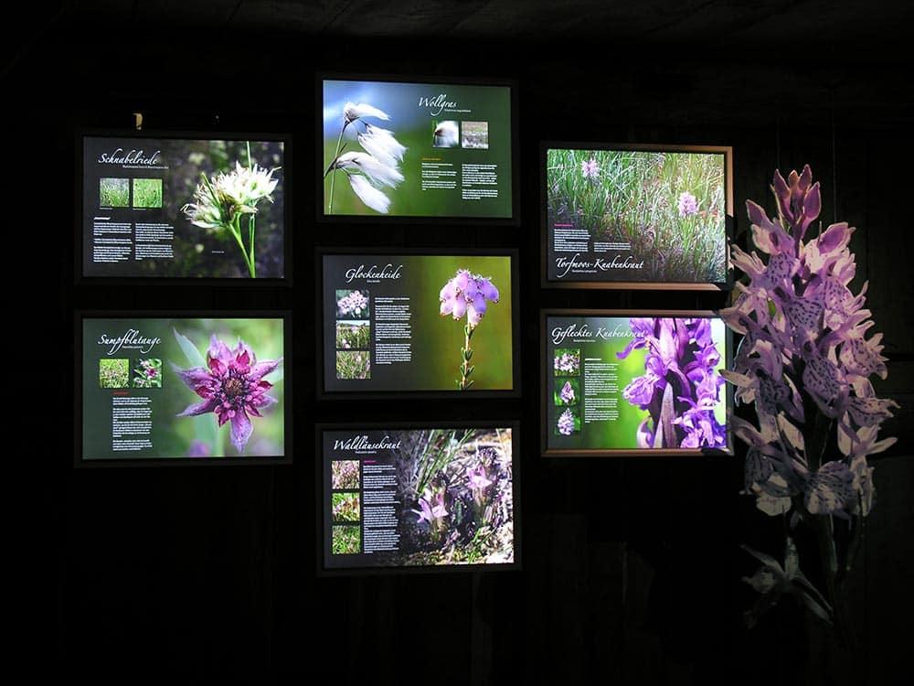 """Ausstellung über den Lebensraum """"Heidemoor"""" im """"Naturspeicher"""" auf dem Emhoff in Wilsede"""