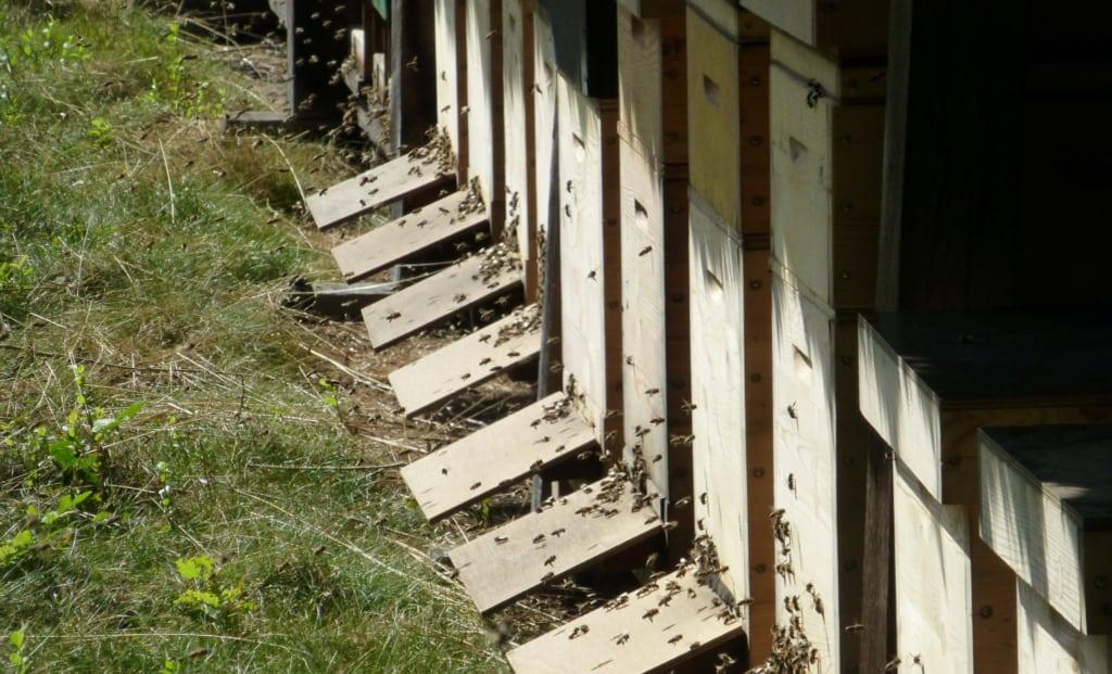 Bieneneinflug | VNP Stiftung