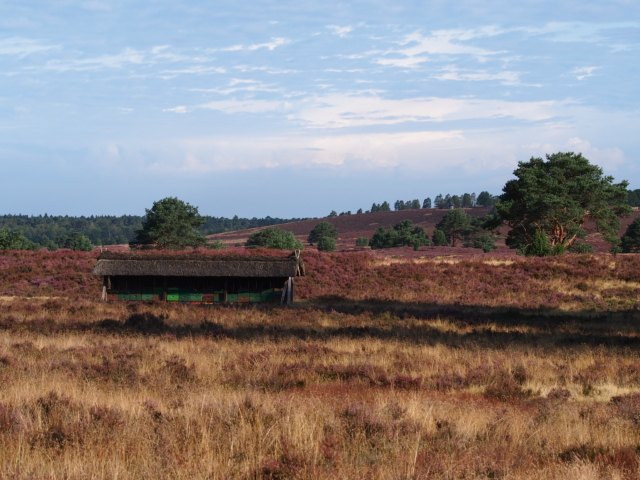 Heideblüte: Bienenzaun in blühender Heidefläche | Foto: VNP Stiftung Naturschutzpark Lüneburger Heide