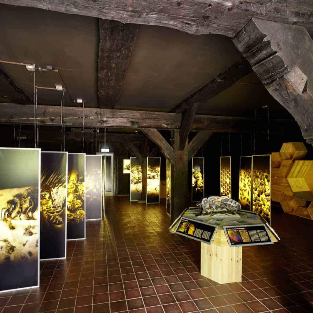 Bienenwelten Niederhaverbeck: Blick in die Ausstellung   Foto: Christian Burmester