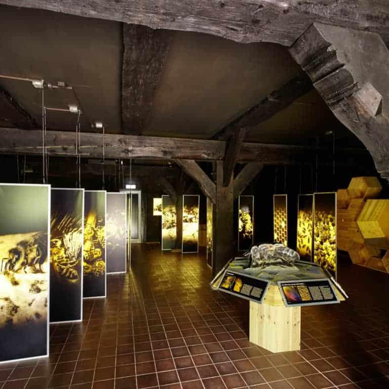 Bienenwelten Niederhaverbeck: Blick in die Ausstellung   Foto: Burmester