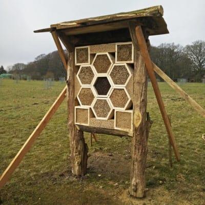 Ein FÖJ-Projekt: die Wildbienenwand