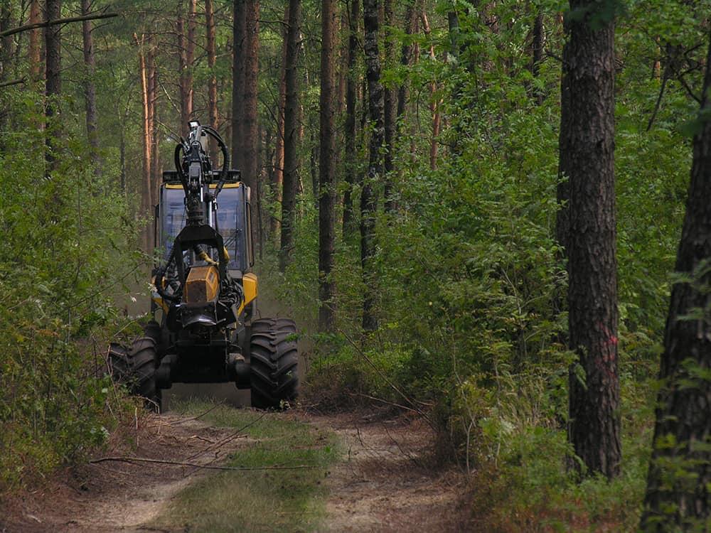 Forest management: Harvester | VNP Stiftung