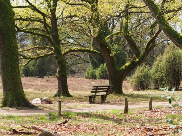 Frühling: Sitzbank im Naturschutzgebiet | Foto: VNP Stiftung Naturschutzpark Lüneburger Heide