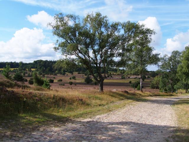 Heideblüte: Gepflasterte Straße im Naturschutzgebiet Lüneburger Heide | Foto: VNP Stiftung Naturschutzpark Lüneburger Heide