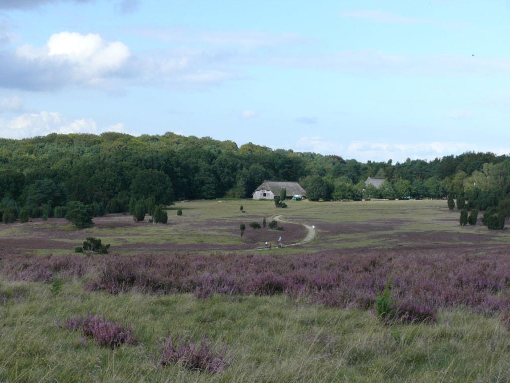 """Blick auf den barrierefreien Rundwanderweg """"Rund um die Haverbeeke"""" zur Heideblütenzeit"""