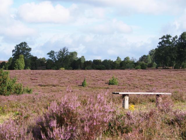 Heideblüte: Heidefläche mit Bank | Foto: VNP Stiftung Naturschutzpark Lüneburger Heide