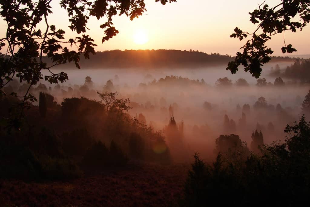 Blühende Heidelandschaft im Sonnenlicht mit Nebelbänken   VNP Stiftung