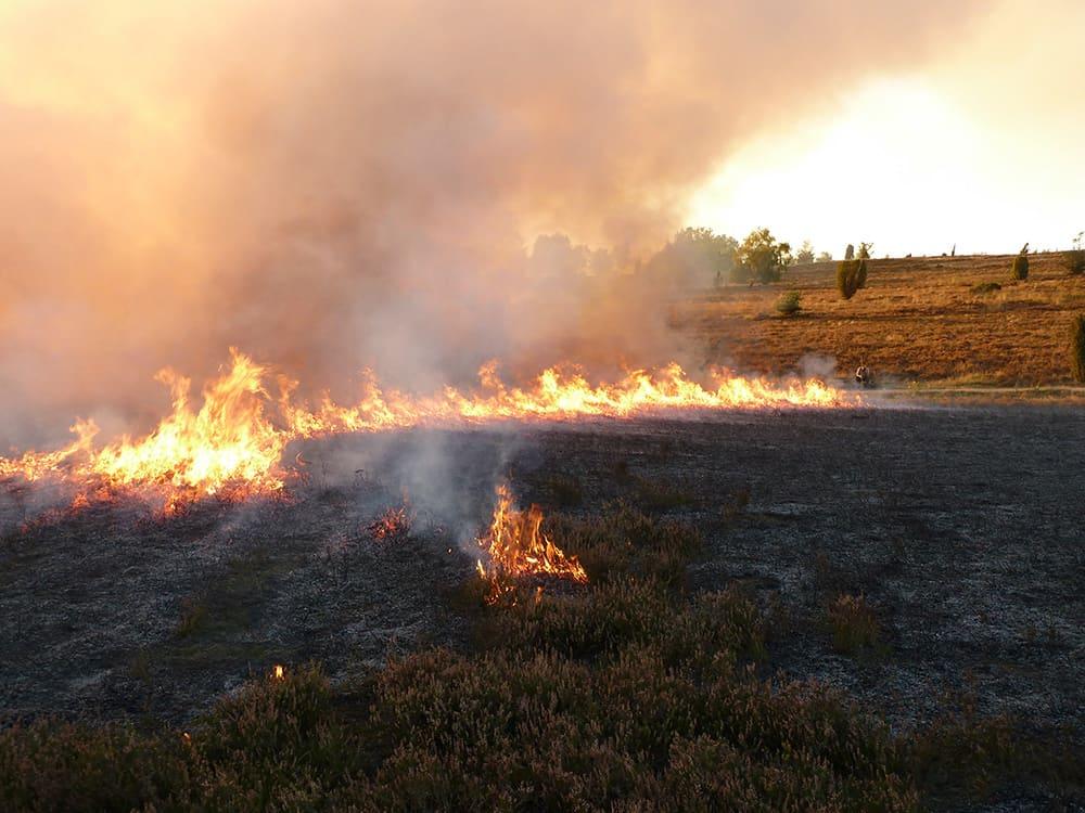 Heath burning at Wilseder Berg   Photo: Sander
