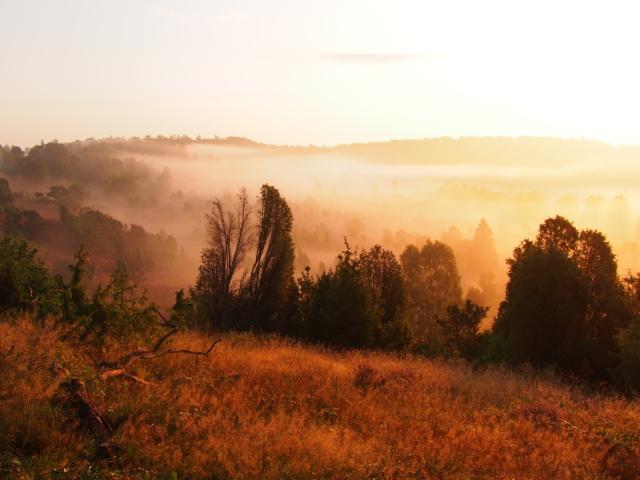 Heideblüte: Landschaft im Nebel | Foto: VNP Stiftung Naturschutzpark Lüneburger Heide