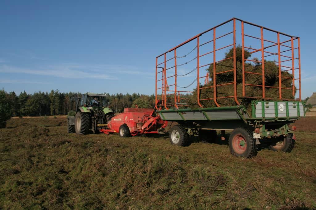 Die Hockdruckballenpresse schleudert die fertigen Heideballen in den Ballenwagen.   VNP-Stiftung