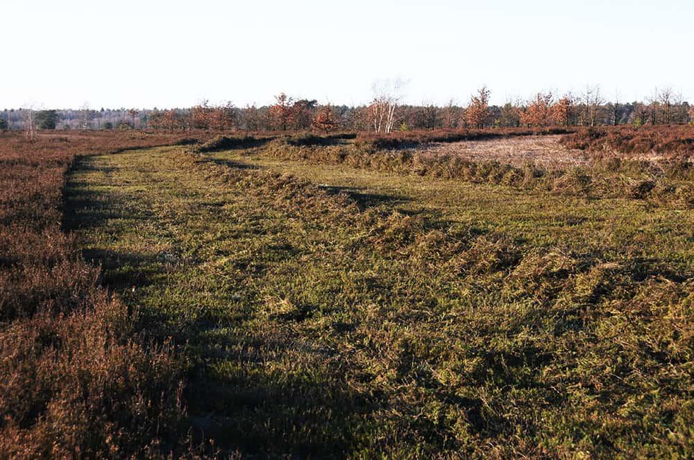 Heath management: Mowing   VNP Stiftung