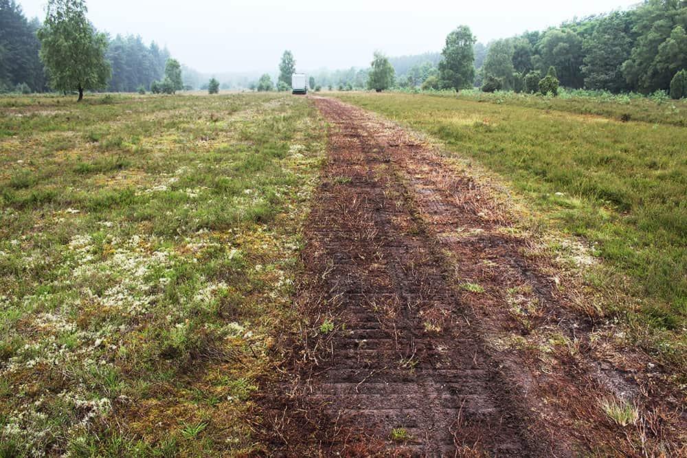 Heath management: Demossing   VNP Stiftung Naturschutzpark