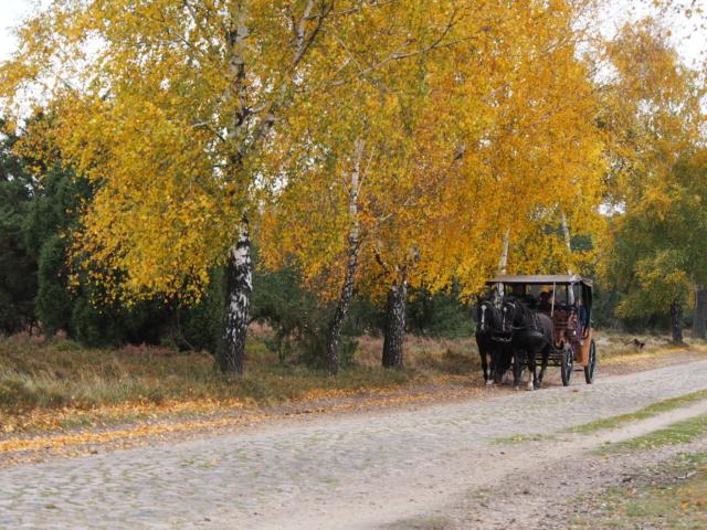 Herbst: Kutschfahrt im Naturschutzgebiet | Foto: VNP Stiftung Naturschutzpark Lüneburger Heide