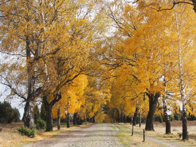 Herbst: Laubverfärbung im Naturschutzgebiet | Foto: VNP Stiftung Naturschutzpark Lüneburger Heide