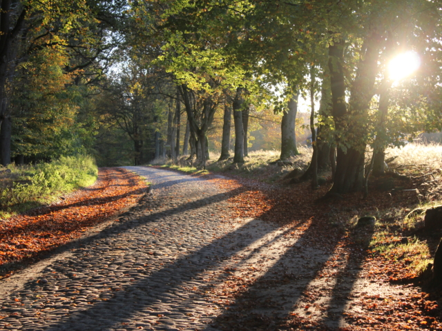 Herbststimmung in Oktober im Naturschutzgebiet | Foto: VNP Stiftung Naturschutzpark Lüneburger Heide