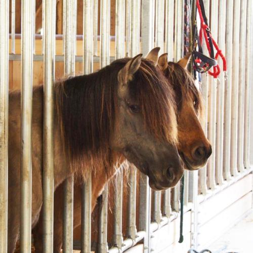 Nutztierarche auf dem Hillmershof: Dülmener Pferde | VNP Stiftung