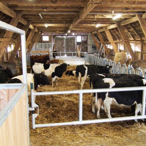 Nutztierarche auf dem Hillmershof: Schwarzbunte Niederungsrinder | VNP Stiftung