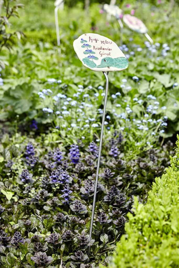 Blue bugle (Ajuga reptans) in the herb, perennial and vegetable garden next to the Emhoff | Photo: Burmester