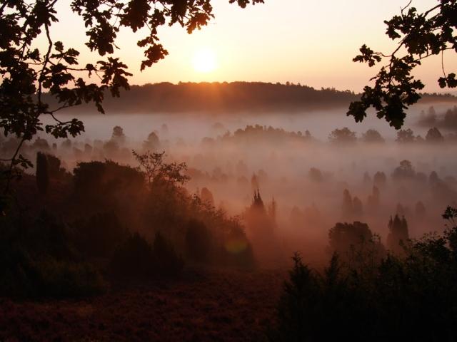 Heideblüte in der Lüneburger Heide: Morgennebel | Foto: VNP Stiftung Naturschutzpark Lüneburger Heide