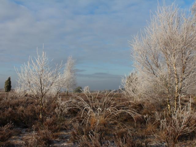 November: Raureif in der Meninger Heide | Foto: VNP Stiftung Naturschutzpark Lüneburger Heide