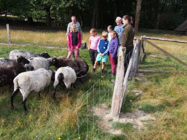 Schulbauernhof Hillmershof Wilsede: Füttern der Heidschnucken | Foto: VNP Stiftung Naturschutzpark Lüneburger Heide