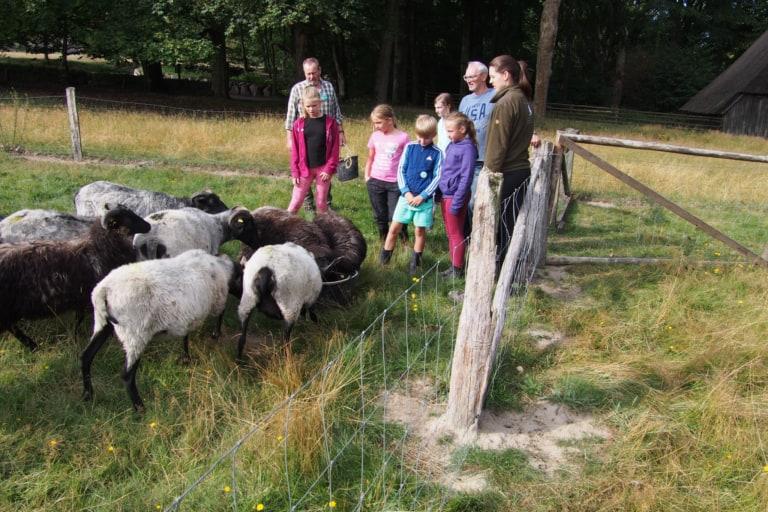 Working with the Heidschnucken at the school farm Hillmershof | VNP Children's Academy