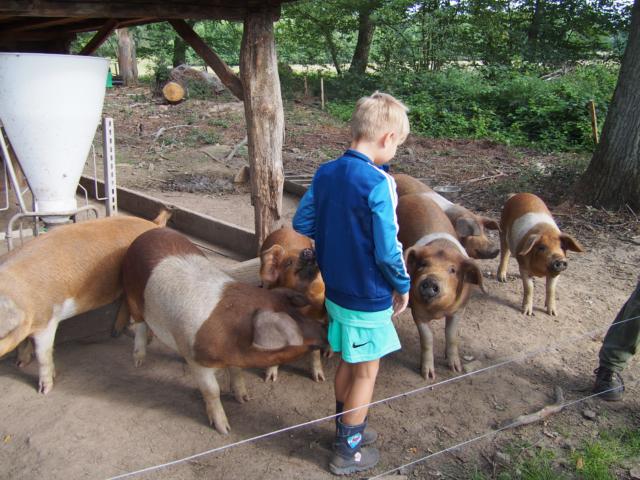 Schulbauernhof Hillmershof Wilsede: Arbeiten mit den Schweinen | Foto: VNP Stiftung Naturschutzpark Lüneburger Heide