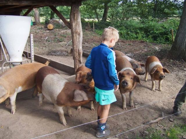 Arbeitseinsatz bei den Schweinen auf dem Schulbauernhof Hillmershof | VNP Kinderakademie