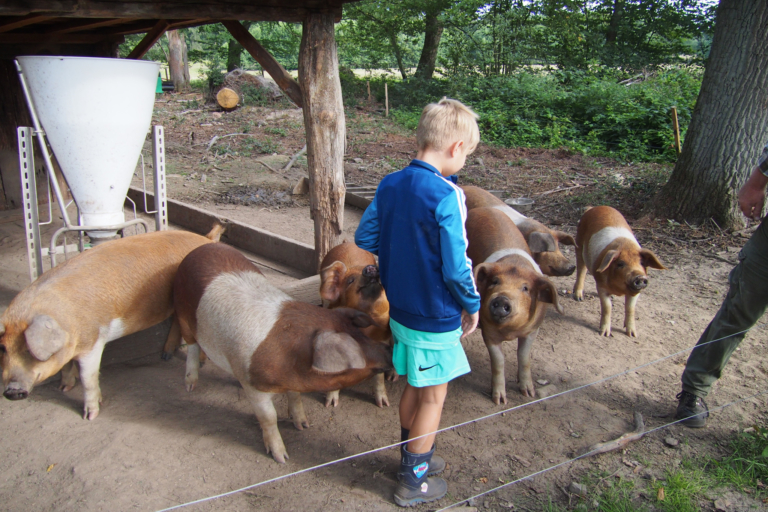 Working with the pigs at the school farm Hillmershof | VNP Children's Academy