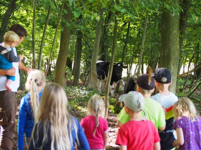Schulbauernhof Hillmershof Wilsede: Schülergruppe im Hutewald mit Schwarzbunten Niederungsrindern | Foto: VNP Stiftung Naturschutzpark Lüneburger Heide