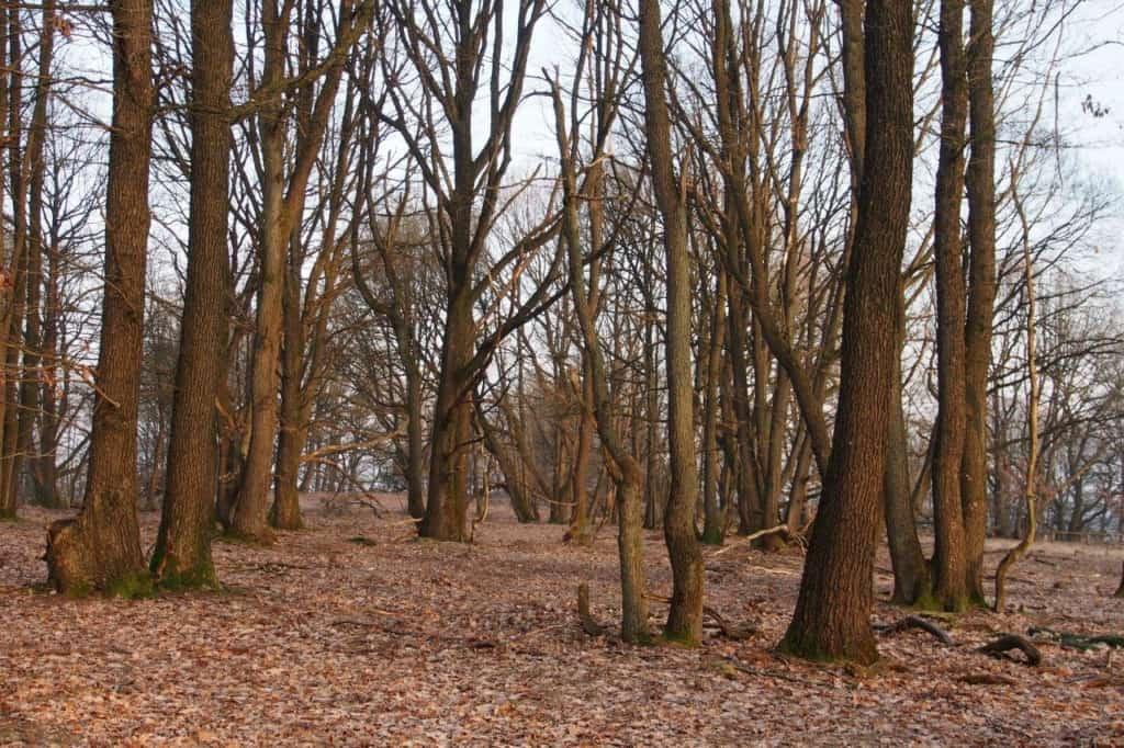 Stühbusch im Winter | VNP Stiftung