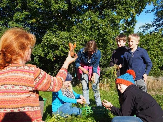VNP Schulbauernhof: Möhrenernte im September | VNP Kinderakademie