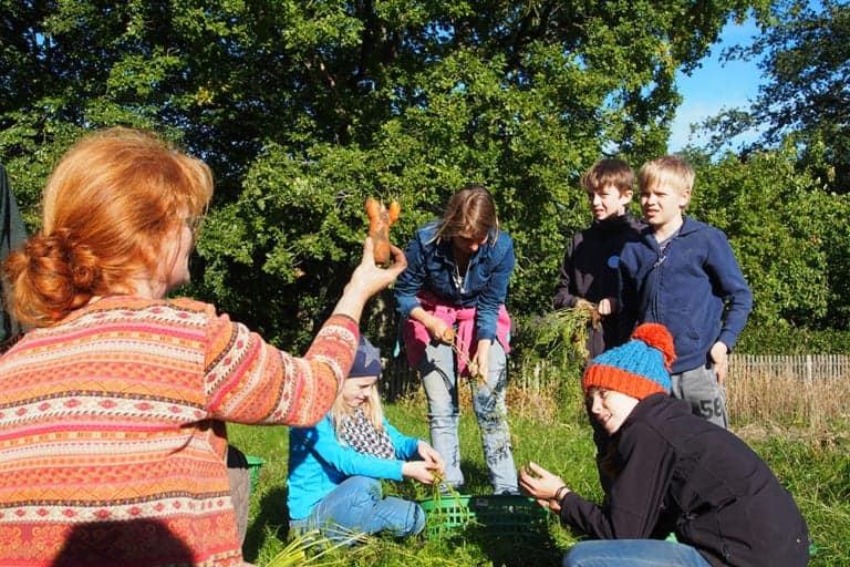 VNP School Farm: Carrot harvest in September | VNP Children's Academy