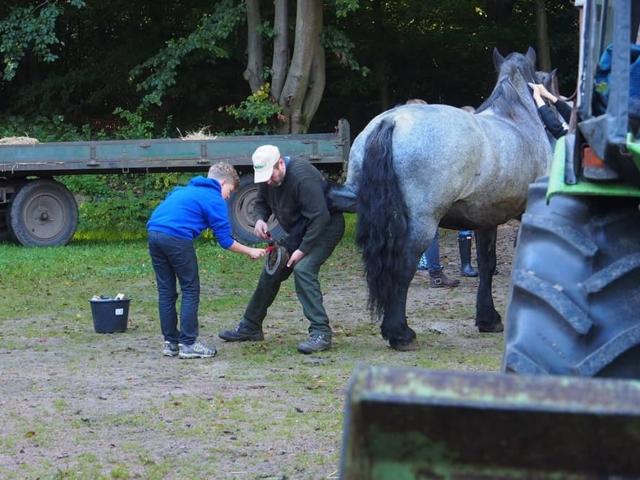 VNP Schulbauernhof: Teamwork auch bei der Pflege der Pferde | VNP Kinderakademie