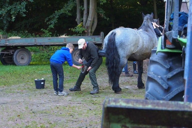 VNP School Farm: Teamwork also in caring for the horses | VNP Children's Academy