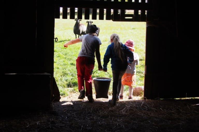 VNP School Farm: Teamwork when feeding | VNP Children's Academy