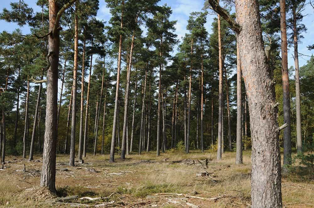 Forest ecology: spruce forest | VNP Stiftung Naturschutzpark