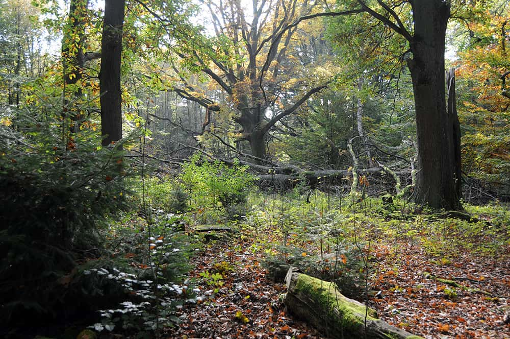 Forest ecology | VNP Stiftung