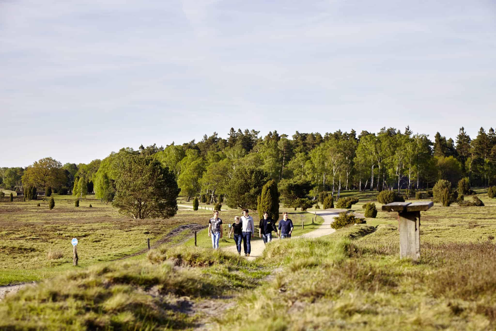 Wandern in der Lüneburger Heide (hier am Tütsberg) | Foto: Christian Burmester